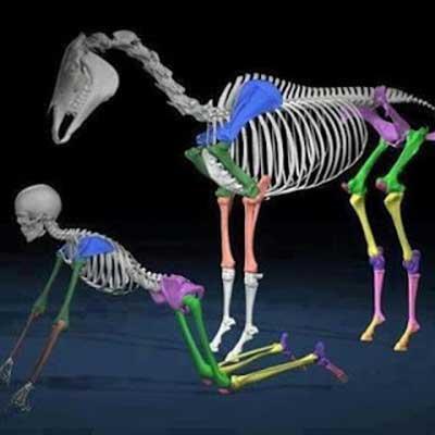 horse-tips-inside-image1